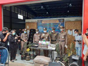 ผบช.น.แถลงจับหนุ่มชาวจีนแอบปลูกกัญชาออแกนิก 1,000 ต้น ย่านประเวศ