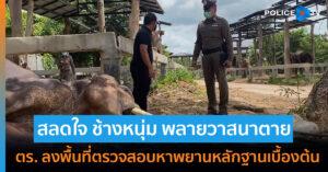 สลดใจ ช้าง พลายวาสนาในศูนย์อนุรักษ์ช้างตาย อาจจะถูกวางยา